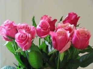 Beautiful birthday roses