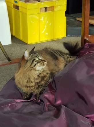 He was one Smitten Kitten!